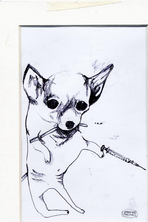 20120318213529-24-druggy-dog2.jpg